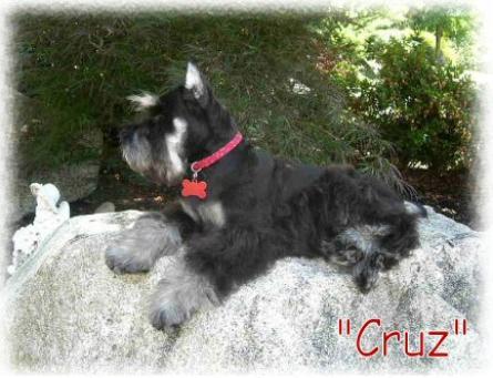 Cruz_4_months_rock-445x341