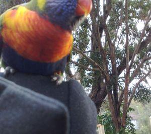 Rainbow on my shoulder