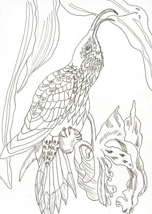 Birdy 35