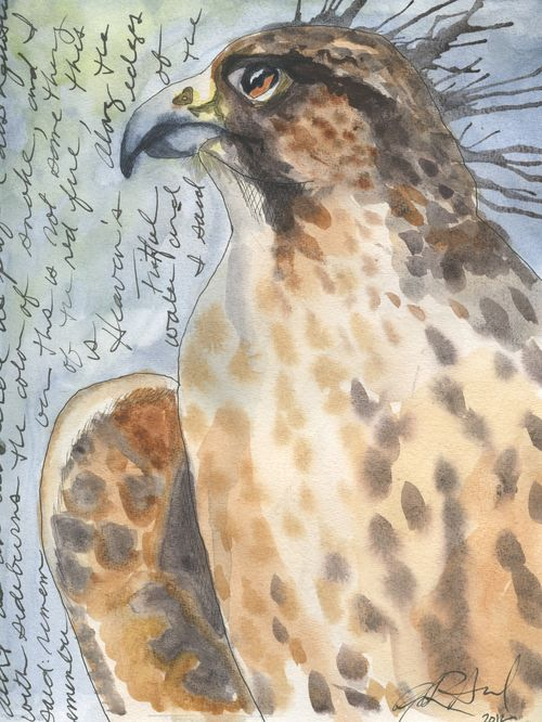 Birdy 48