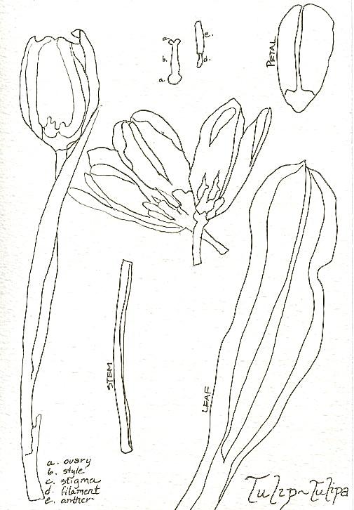 Flower dis